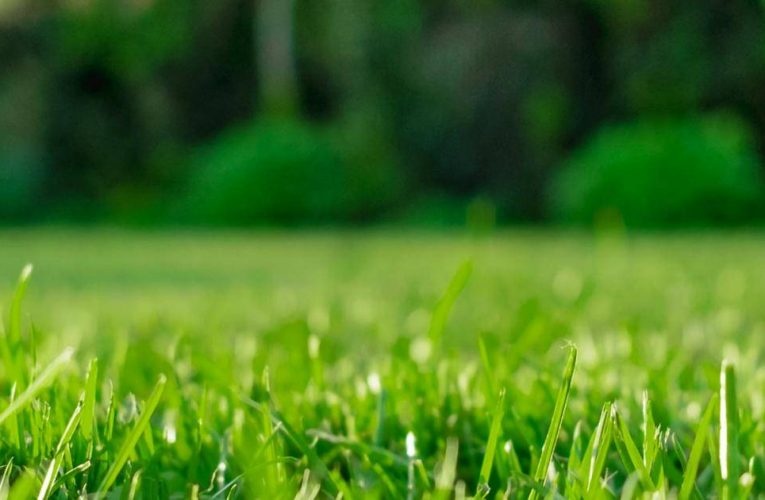 The Definitive Guide to Lawn Care